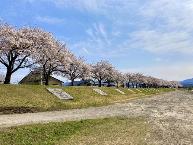 宮川千本桜