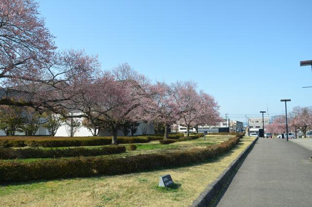 鶴ヶ城の桜01_0401